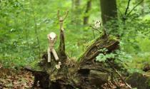 Kunstwerke aus Holz im Wald
