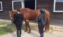 Schüler bei der Pferdepflege